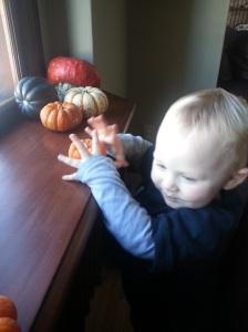 Loves him some pumpkins.
