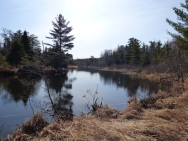 Chequamegon National Forest - April 2015 (1)