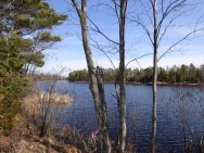 Chequamegon National Forest - April 2015 (10)