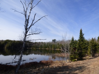 Chequamegon National Forest - April 2015 (12)