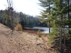 Chequamegon National Forest - April 2015 (13)