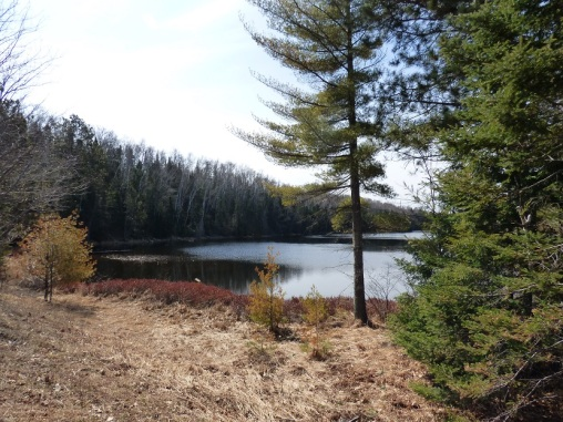 Chequamegon National Forest - April 2015 (15)