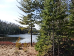Chequamegon National Forest - April 2015 (16)
