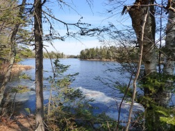 Chequamegon National Forest - April 2015 (18)