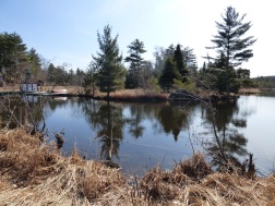Chequamegon National Forest - April 2015 (3)