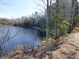 Chequamegon National Forest - April 2015 (8)