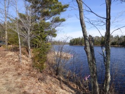 Chequamegon National Forest - April 2015 (9)